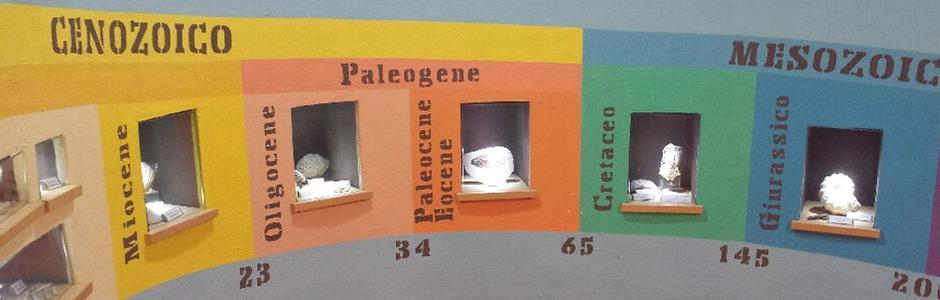 "Museo Paleontologico ""Silvio Lai"""