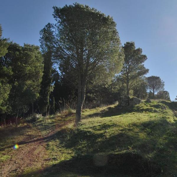 Bosco Baronia - Aree naturalistiche - Vita