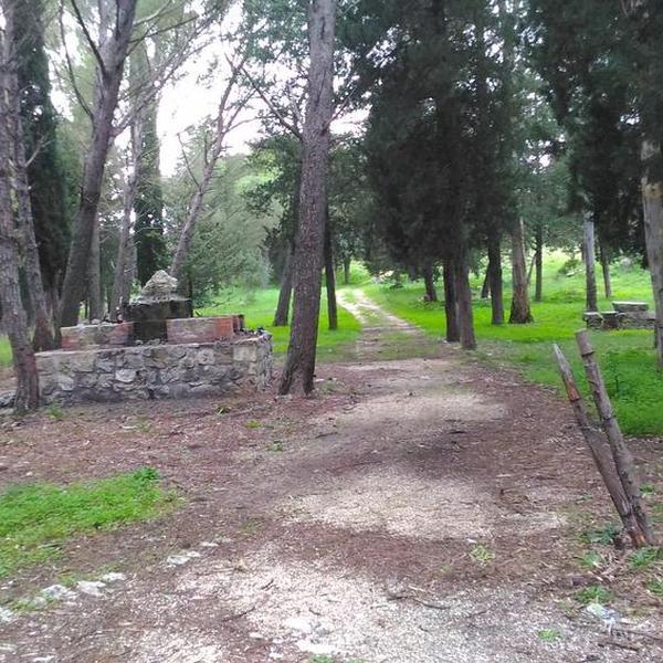 Bosco della Resinata - Aree naturalistiche - Sambuca di Sicilia