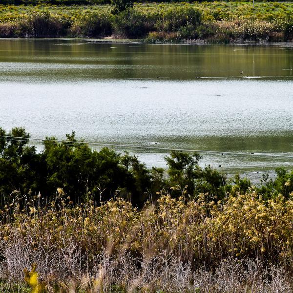 Laghetto Gorgo - Aree naturalistiche - Montallegro