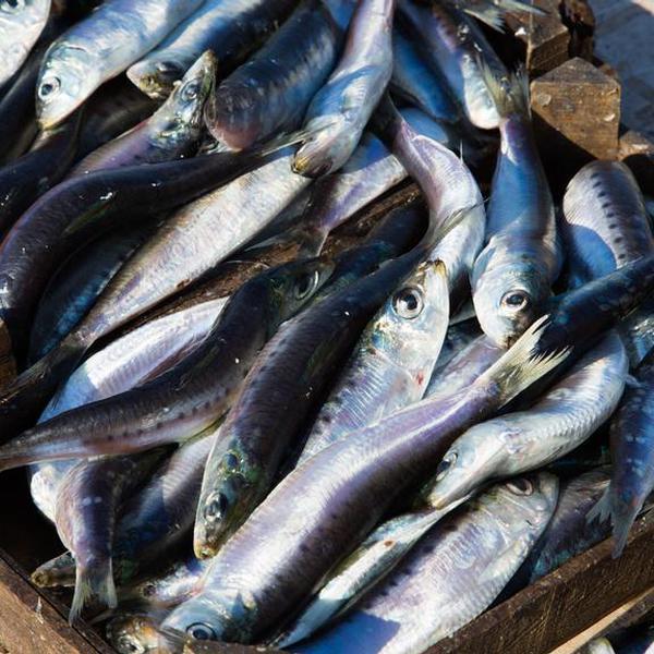 Pesce Azzurro