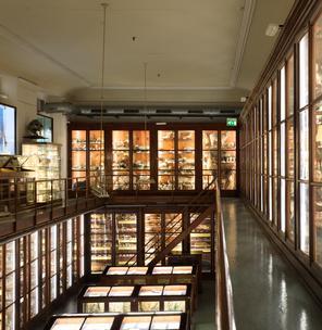 """MUSEO DI ZOOLOGIA """"PIETRO DODERLEIN"""""""