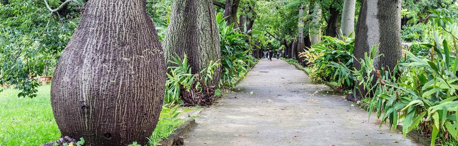 Orto Botanico dell'Università degli studi di Palermo