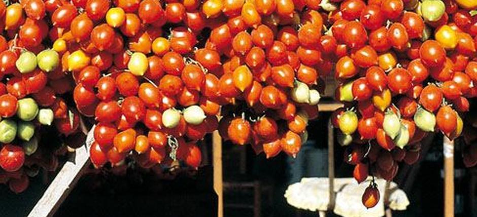 CoopCulture per le vie dei Presidi Slow Food