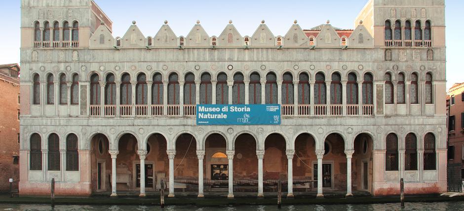 Museo di storia naturale venezia musei biglietteria orari for Orari museo guggenheim venezia