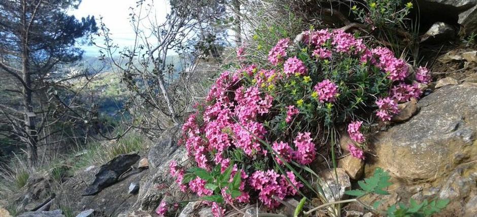 Nel Parco del Beigua, sull'Alta Via in fiore