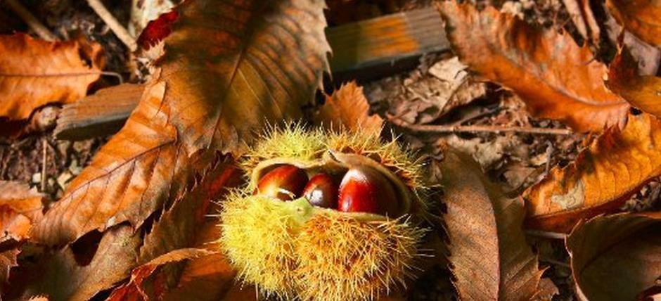 Profumo di castagne e aroma di luppolo