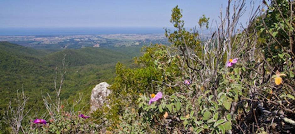 Paesaggi medievali nella bassa Val di Cecina