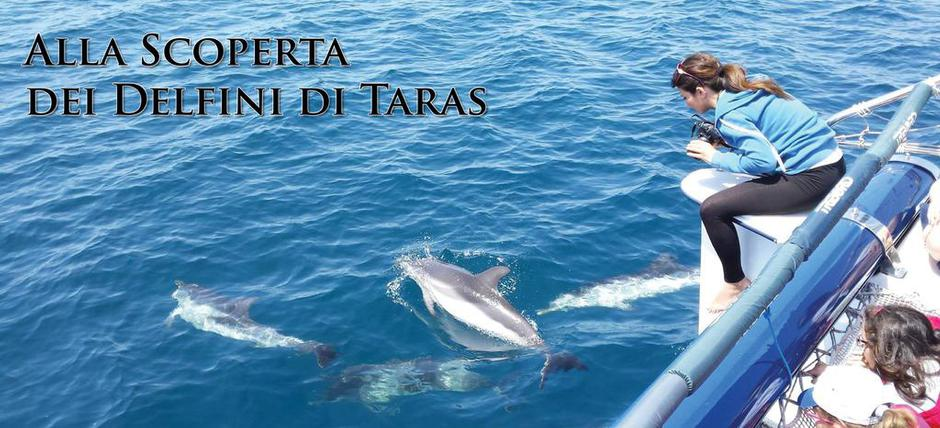 Discovering Taras' Dolphins