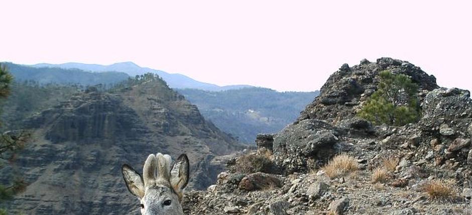 Scoprire il Beigua Unesco Global Geopark attraverso la sua fauna