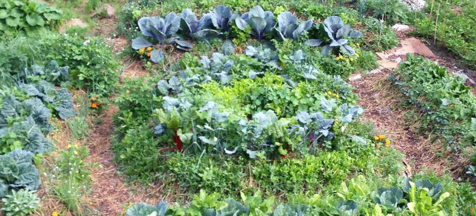 Synergic vegetable garden, synergic planet